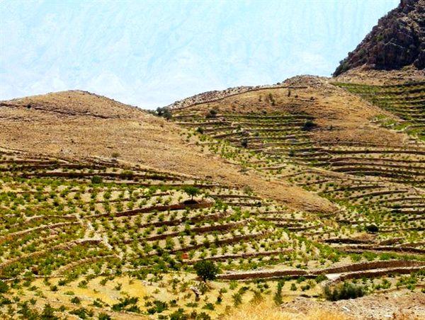 اجرای طرح توسعه باغات دیم در اراضی شیبدار چهارمحال و بختیاری