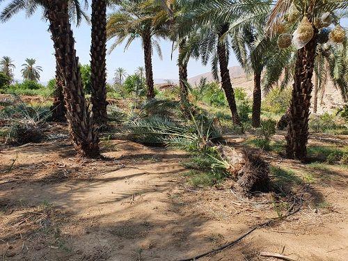 خسارت 257 میلیارد ریالی از رگبار در قیروکارزین