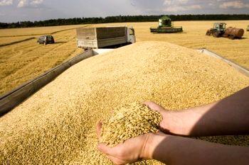 حدود ۱۲۷ هزار تن گندم به سیلوهای خراسان شمالی تحویل شد