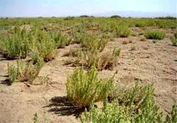 بازدید مدیرکل منابع طبیعی و آبخیزداری خراسان شمالی از نهالهای گلدانی بیابانی تولید شده