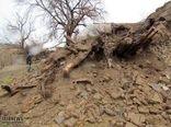 سرمازدگی و سیل به بخش کشاورزی شهرستان رابر خسارت وارد کرد