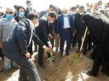 کاشت نهال به مناسبت روز درختکاری با حضور استاندار کرمان