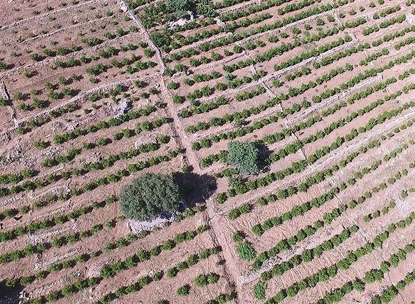 افزایش 52 درصدی سطح باغات کردستان