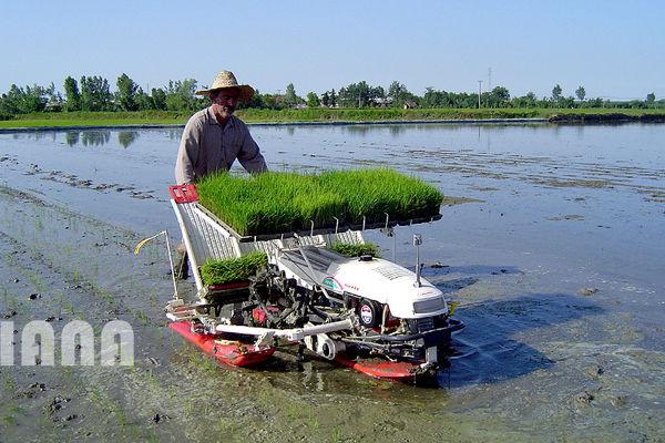 انقلاب برنج در آسیا