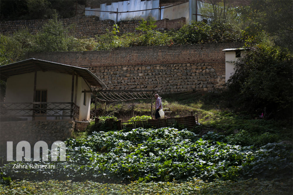 ساخت و سازهای بیرویه در روستای زیارت گرگان