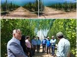 استانداردترین مدل سایبان باغات میوه کشور در قزوین به بهرهبرداری میرسد