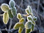کشاورزان رفسنجانی هشدار سرمازدگی محصولات کشاورزی را جدی بگیرند