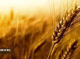 کردستان، رتبه دوم تولید گندم در کشور را دارد
