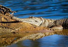تصویر منتخب حیاتوحش هفته