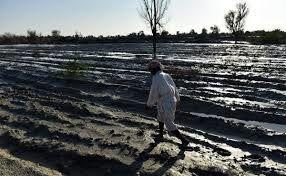 خسارت 742 میلیارد تومانی کشاورزی در سیستان