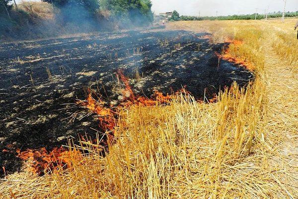 سوزاندن عمدی کاه و کلش مزارع ۲ سال حبس به همراه دارد