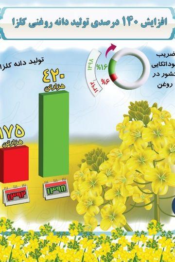 افزایش 140 درصدی تولید دانه روغنی کلزا