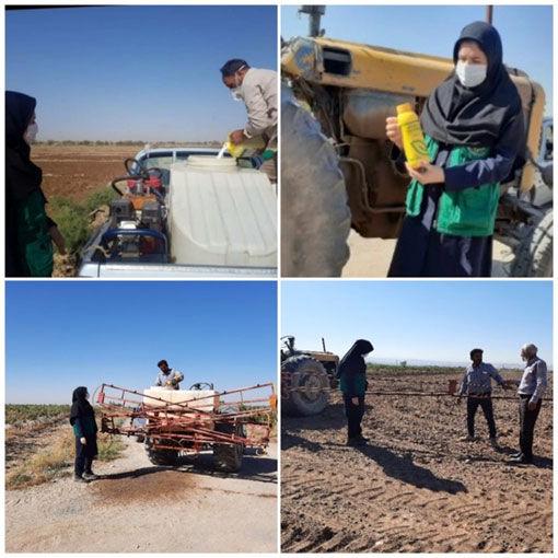 کنترل علفهای هرز مزارع کلزا در بخش ایلخچی