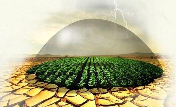 ۱۱ هزار هکتار اراضی کشاورزی مانه و سملقان زیر پوشش بیمه قرار گرفت