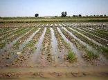 سیل ۳۵ میلیارد ریال به کشاورزان و دامداران جاجرمی خسارت زد