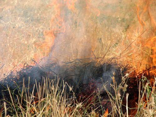 مهار کامل آتش در مراتع آبگرم قیروکارزین