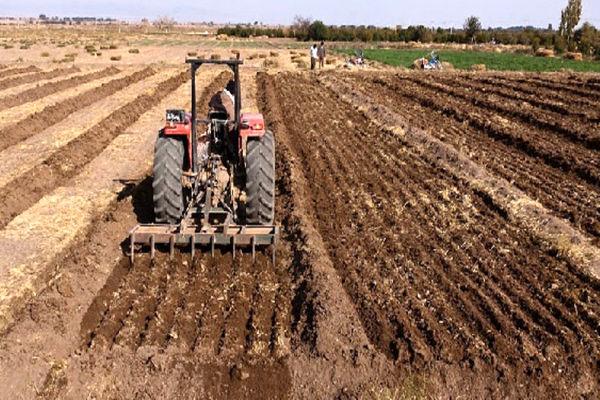 کشت گندم در131 هزار هکتار از اراضی کشاورزی استان قزوین