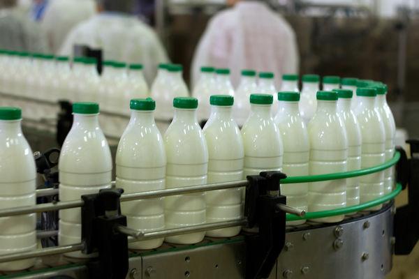 تولید سالانه بیش از 27 هزار تن شیر در شهرستان نمین