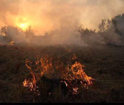سوزاندن کاه و کلش مزارع گندم ممنوعیت قانونی دارد