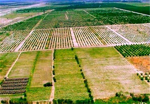 آغاز اجرای طرح کاداستر اراضی کشاورزی در دهلران