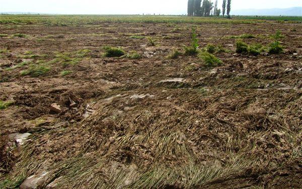 92 میلیارد ریال تسهیلات قرض الحسنه  به سیل زدگان بخش کشاورزی پرداخت شد