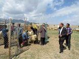 بازدید مدیر کل دامپزشکی استان کرمان از نحوه اجرای واکسیناسیون دام های عشایر شهرستان بردسیر