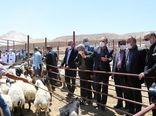 خرید حمایتی دام زنده مازاد عشایر در کشتارگاه های فارس