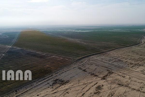 عملیات بیابان زدائی در 100 هکتار از اراضی بیابانی حاجی آباد سمنان انجام شد