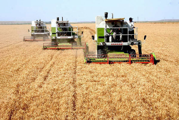 وزارت جهاد کشاورزی دربخش تضمین وثایق ورود کند