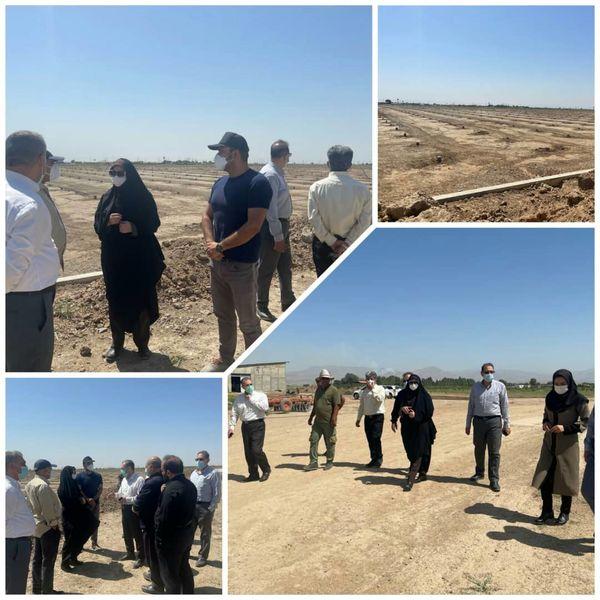 توسعه کشت گلخانهای از اولویتهای اصلی سازمان جهاد کشاورزی استان قزوین است