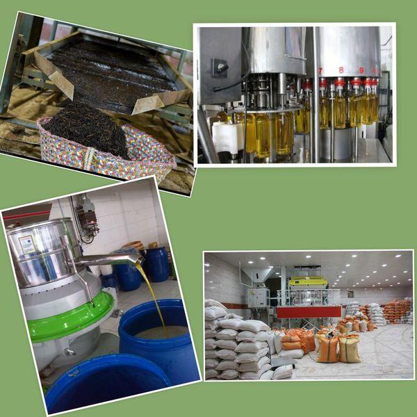 رونق تولید با افزایش ظرفیت های اشتغال محقق می شود