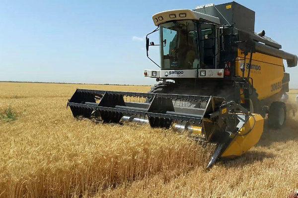60 هزار میلیارد ریال بهای گندم در سفره کشاورز ایرانی