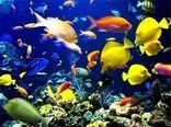 تولید چهار میلیون قطعه انواع ماهی زینتی در آبیک