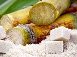 پیشبینی تولید بیش از ۶۰۰ هزار تن شکر با وجود بحران بیسابقه کم آبی