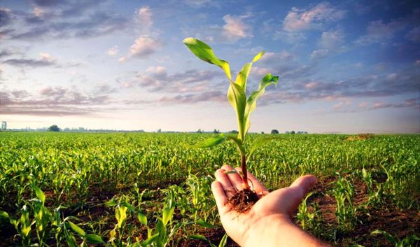 شرایط دریافت گواهیهای نباتی در قزاقستان برای صادرکنندگان اعلام شد