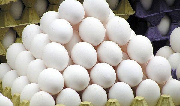 برخورد جدی با افزایش قیمتهای نامتعارف مواد پروتئینی بهویژه تخممرغ