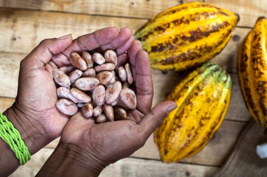 تولید شکلات با افزایش جنگل زدایی در کشورهای فقیر مرتبط است
