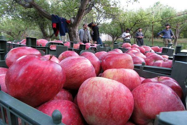 آذربایجان شرقی در تولید میوه جایگاه پنجم کشور را دارد