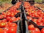 عملیات بیولوژیک علیه آفات در مزارع کامیاران
