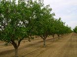 طرح توسعه، اصلاح و جایگزینی باغات در ۵۵۰۰ هکتار از باغات قزوین اجرا میشود