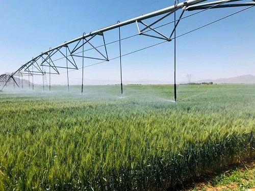 طرح گندم بنیان در مزارع اقلید توسعه می یابد
