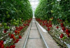 تولید ۷ هزار تن محصول گلخانهای در خراسان جنوبی