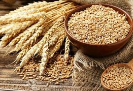 تکذیب کمبود بذر گواهی شده در شهرستان مرودشت