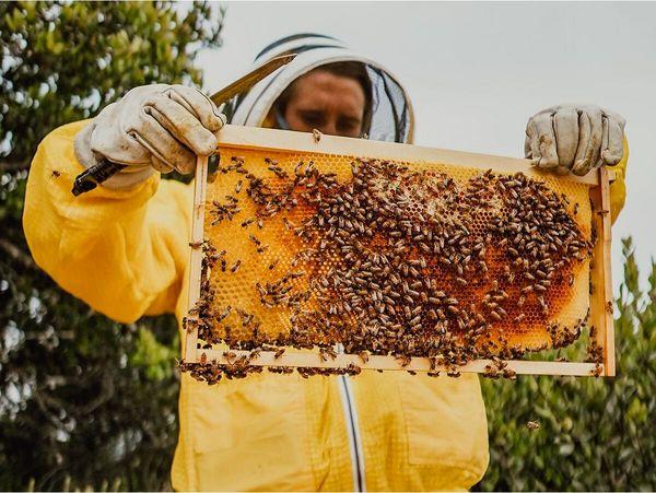 تولید سالانه 544 تن عسل در قائمشهر/ ارزش اقتصادی 380 میلیاردی
