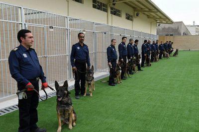 راهاندازی مرکز آموزش سگهای موادیاب گمرک