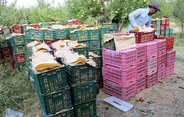 صدور 1.5 میلیون تن محصول کشاورزی در دو ماه