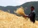 خرید تضمینی چهار هزار تن گندم از بهرهبرداران استان اصفهان