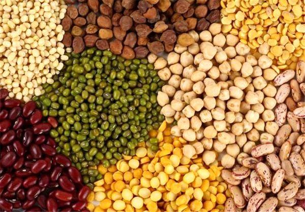اختصاص ۲۰ هزار هکتار از مزارع قزوین به کشت حبوبات