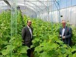 سطح گلخانههای استان اردبیل امسال به ۱۰۰ هکتار افزایش مییابد