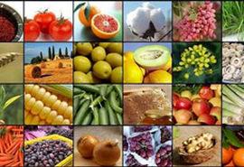 بررسی طرح سامانه پایش محصولات کشاورزی